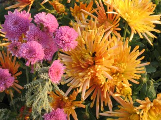 jardin d'automne_8791