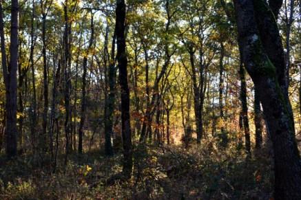 le bois de la Pleysse (Launac)