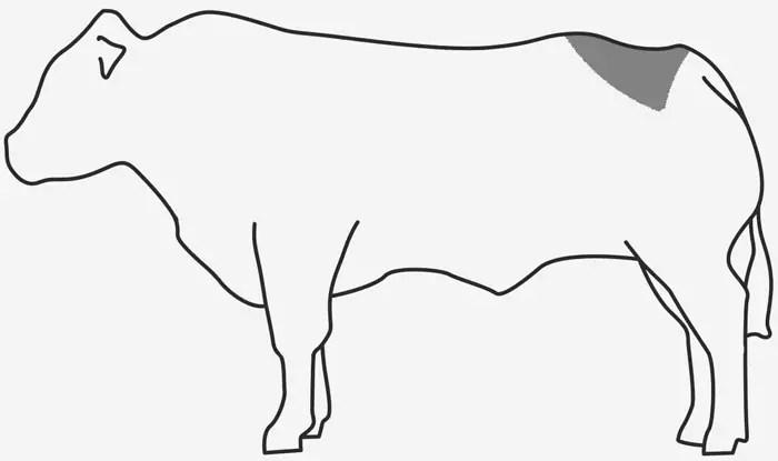 Afbeeldingsresultaat voor picanha koe