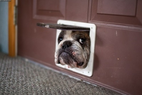 http://cutedogpix.com/trying-to-get-in/