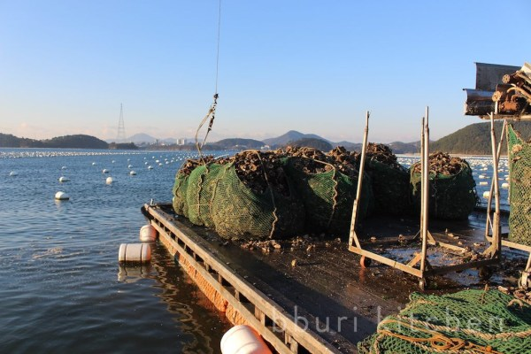 IMG_7512_oysters