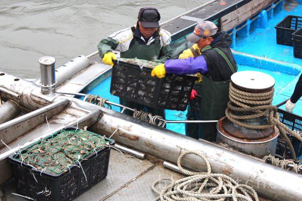 Unloading crabs in Incheon