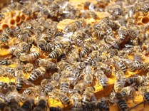 bees-486872_960_720