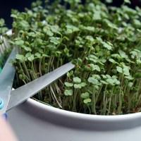 Les graines germées : un concentré de nutriments / Mode d'emploi 🌱💧🌞