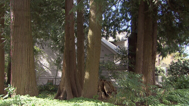 A Vancouver property lined with trees