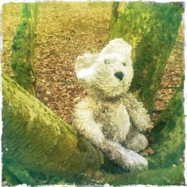 Little Bear lost in the woods