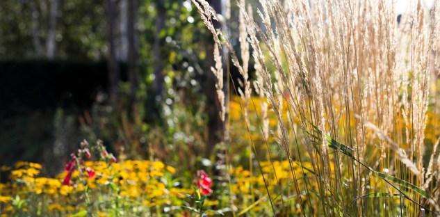 BCA Landscape Rotunda - Mid Oct 2015 - grasses