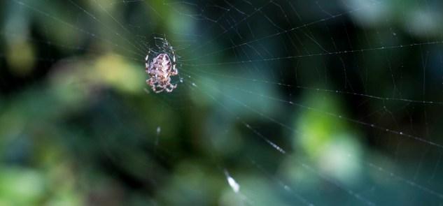BCA Landscape Rotunda Spider 2015