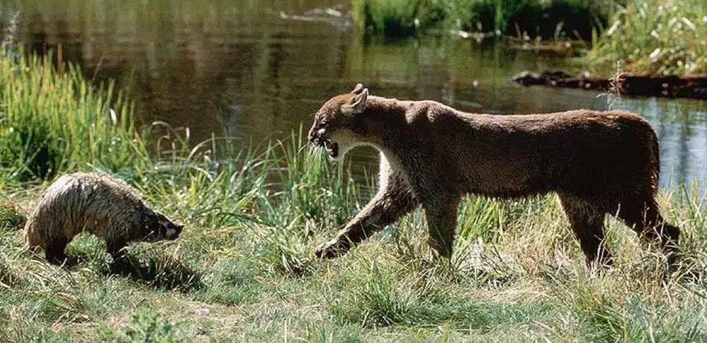 CORE Hunter Education Animal Identification Quiz CORE Exam Challenge