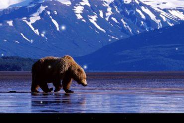 B.C. bans grizzly bear hunt, effective immediately Dec 18 2017