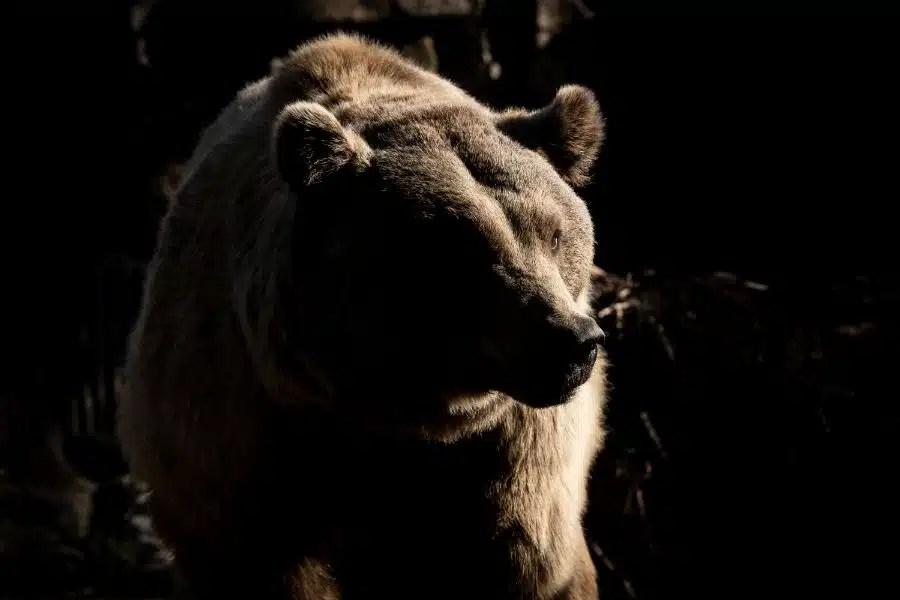 Predatory Wildlife & Bear Defence – Shotgun & Rifle Certification Oct 14