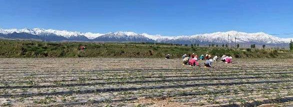 manual weeding reduces herbicide use