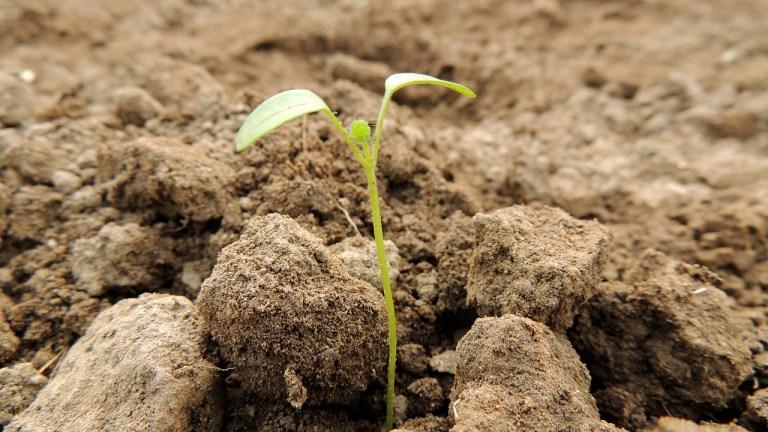 極權想把我們埋葬 卻不知我們是種子