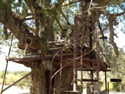 Tree house and spiral stairs
