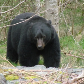 bigbear1