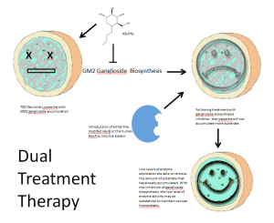 A proposal that suggests the use of two different forms of therapy to utilize their individual strengths to complement the weakness of the other. This abstract shows a combination of substrate reduction followed by enzyme replacement. With the inhibition of ganglioside accumulation, low levels of enzyme activity may be effective of removing the accumulated substrate and maintaining proper cell state.