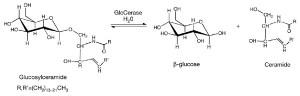 GlcCerase hydrolysis mechanism. Source: Dvir et al. 2003