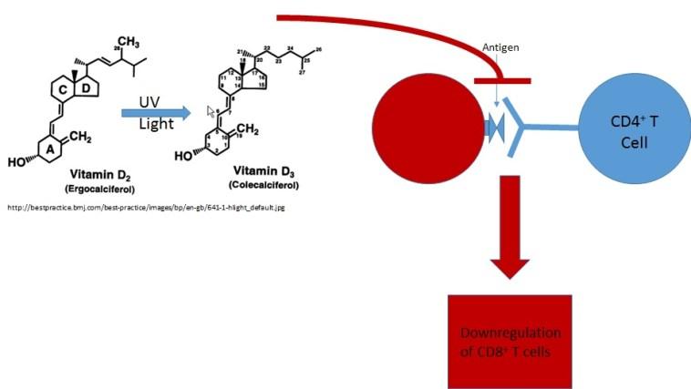 Figure 2: Bioactive Vitamin D3 inhibits antigen presentation to CD4+ (helper) T cells. (Source: persona image)