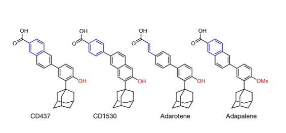 Retinoids: A future class of antibiotics?