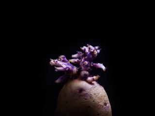 Old potato