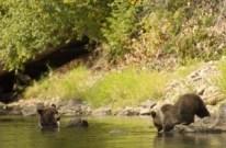great-bear-rainforest