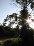 Dad was making me nervous on that ladder!