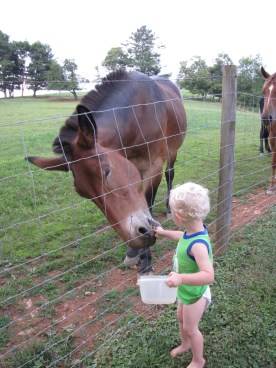 My son feeding a mule that was 100 times his size at a friend's house the other day