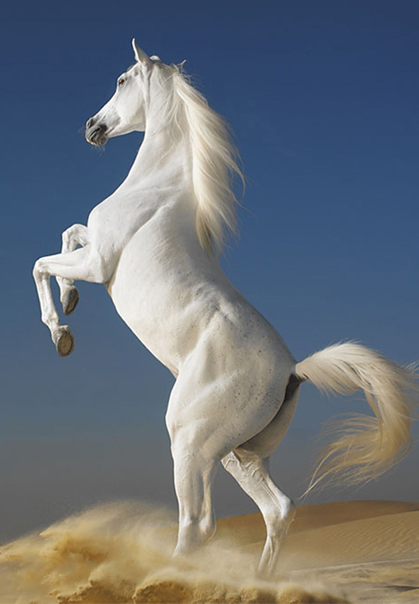 White Horse Wallpaper