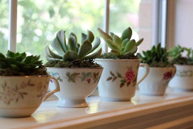 Teacup Succulents by Simply Julie