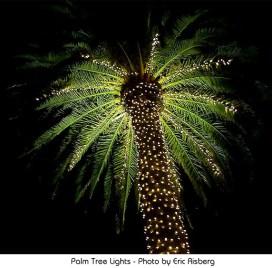 Palm Tree Lights - Photo by Eric Risberg