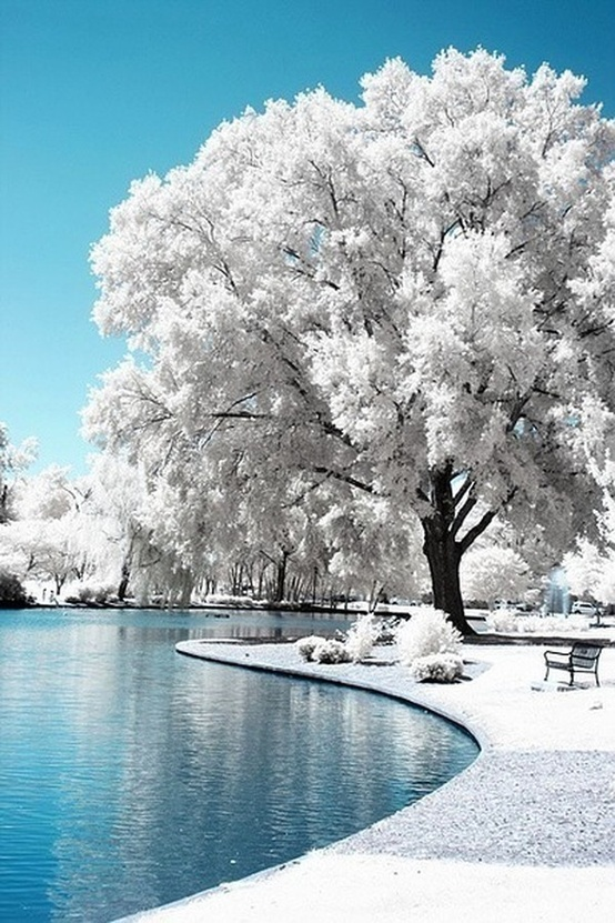 Infrared Trees in Freedom Park Charlotte, NC, by Chris Summerville