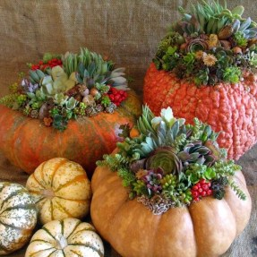 Laura Eubanks - Autumn Succulent Pumpkin Container Arrangements
