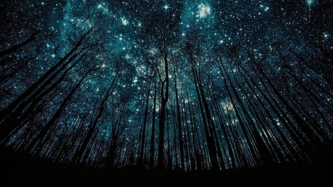 The Stars through the Trees