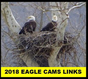 2018 Eagle Cam Links