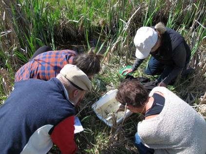 Participants looking at aquatic invertebrates