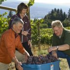 One way government can help, not hinder, the BC wine industry