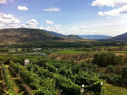 15 things that changed the BC wine industry in 2011