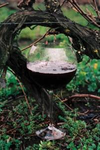vine-drip