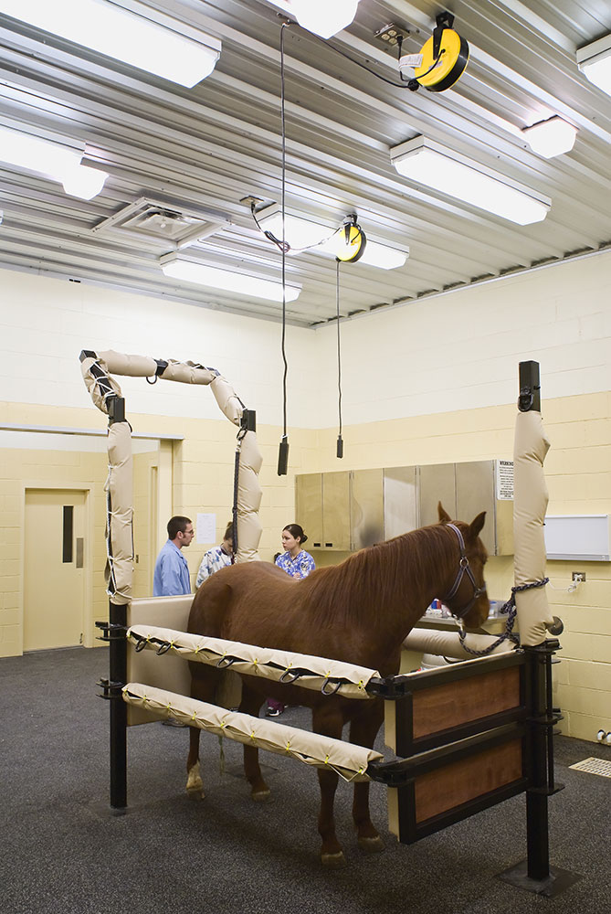 Bda Architecture Veterinary Hospitals Equine Mixed