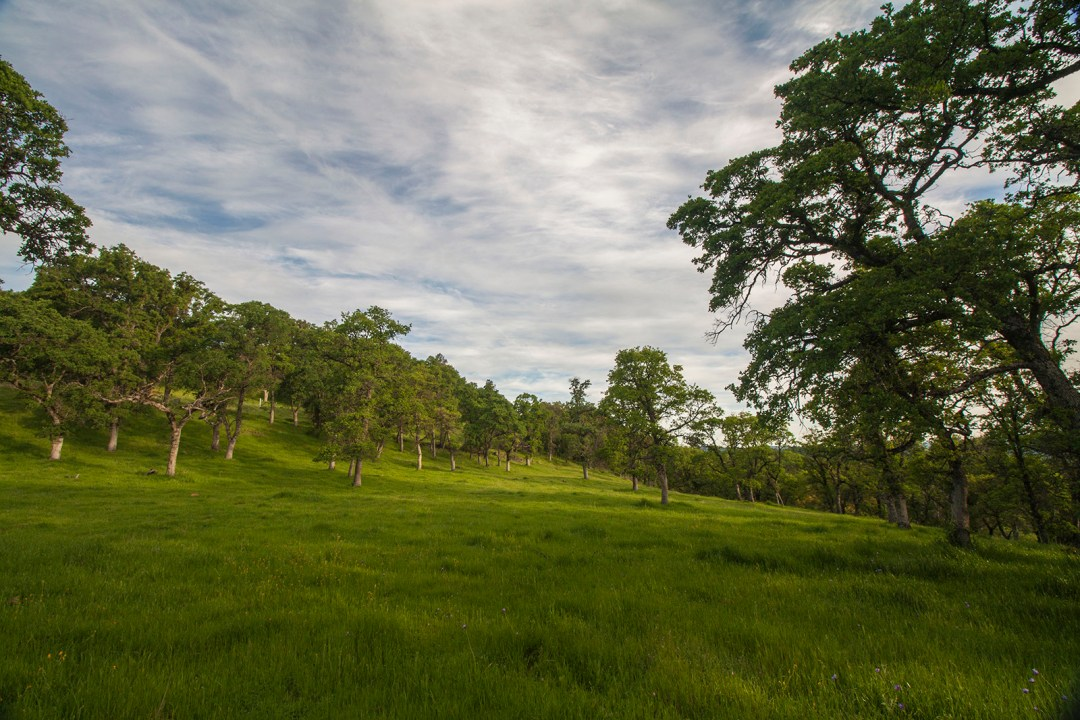 Ranch 4 - a beautiful building pad surrounded by oaks