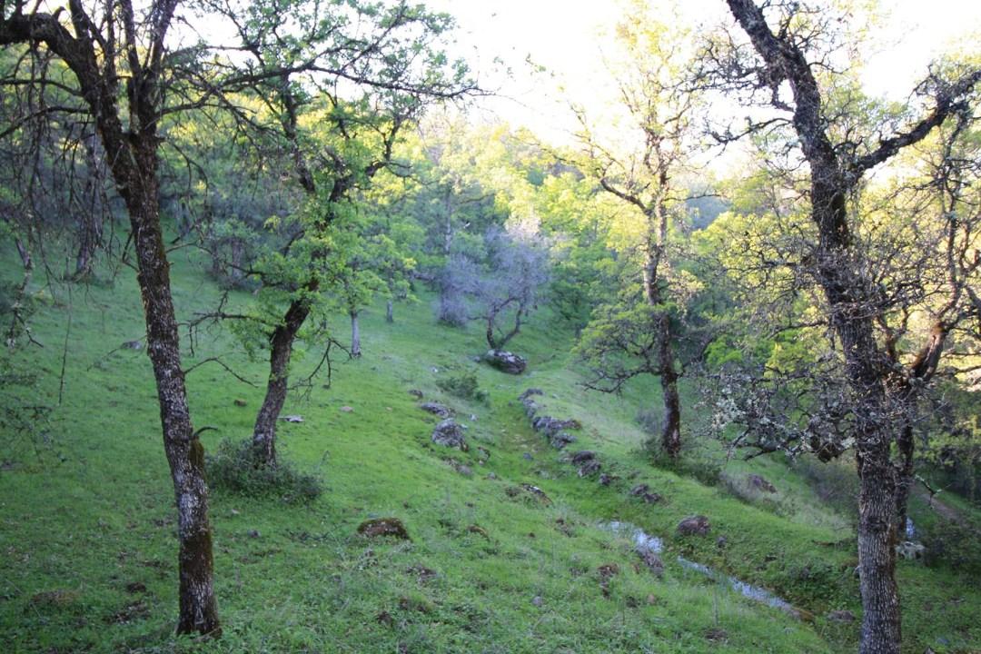 Ranch 6 (1)