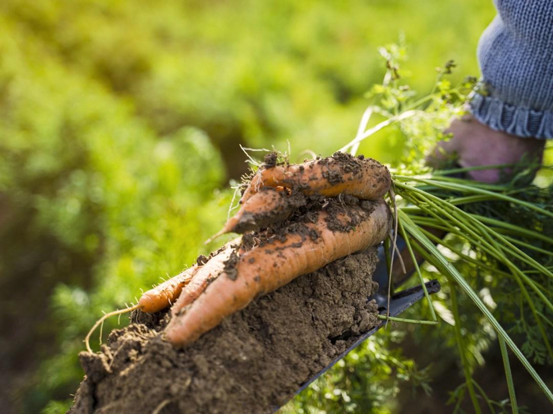 Biodynamic BDA UK Certification Farm Conversion-01