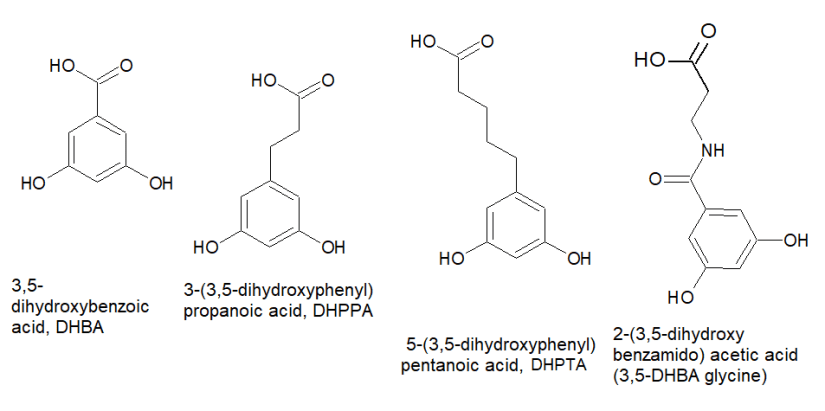 Metabolites of long chain alkyl resorcinols from wheat and rye.
