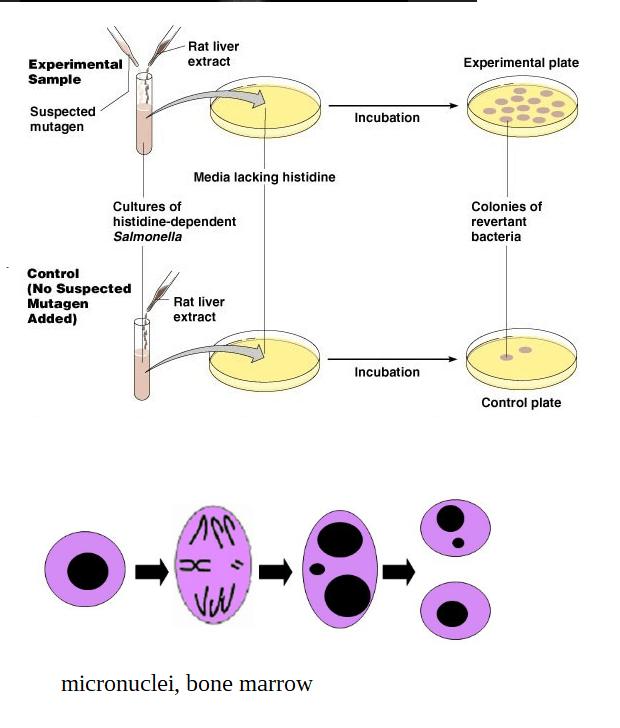 genotoxicity tests for pecan shell tea