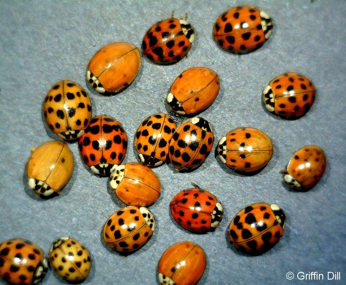 How To Keep Ladybugs Out Of Your Home This Winter