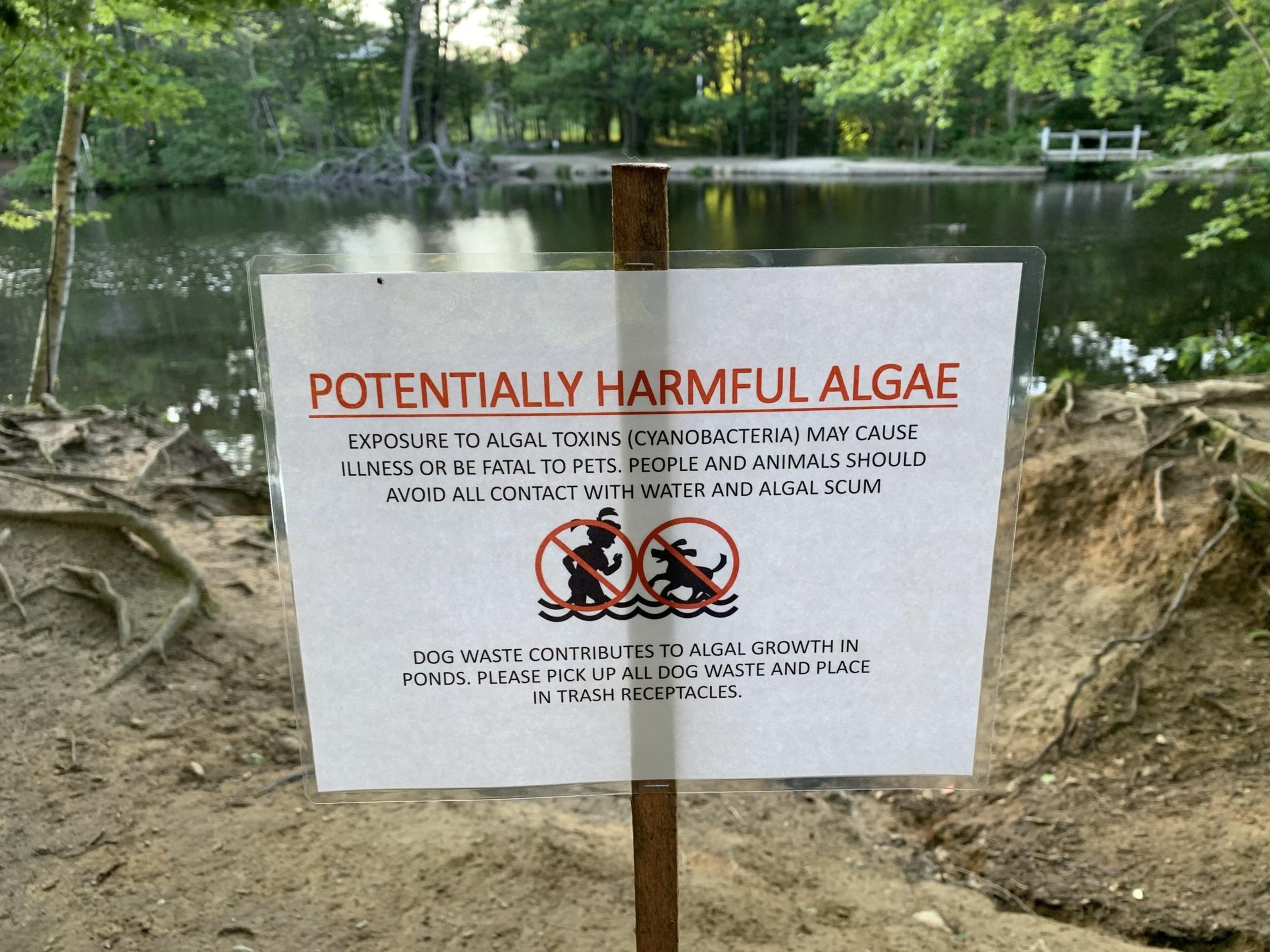 Dog-killing toxic algae may be forming in South Portland park