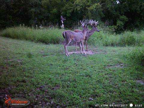 2 big bucks stop for a snack in this trail camera photo