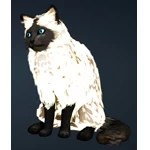 [Tier 1] Black Mask Cat