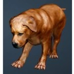 [Tier 1] Brown Fighting Dog