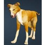 [Tier 1] Kaia Racing Dog
